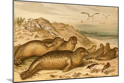 Seals-F^W^ Kuhnert-Mounted Art Print
