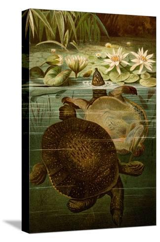 Turtles-F^W^ Kuhnert-Stretched Canvas Print