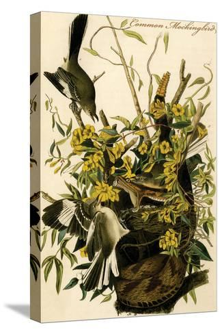 Common Mockingbird-John James Audubon-Stretched Canvas Print