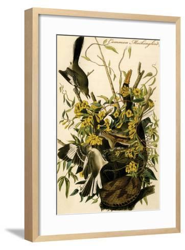 Common Mockingbird-John James Audubon-Framed Art Print