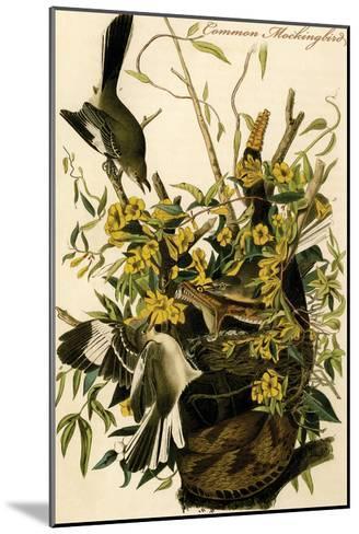 Common Mockingbird-John James Audubon-Mounted Art Print