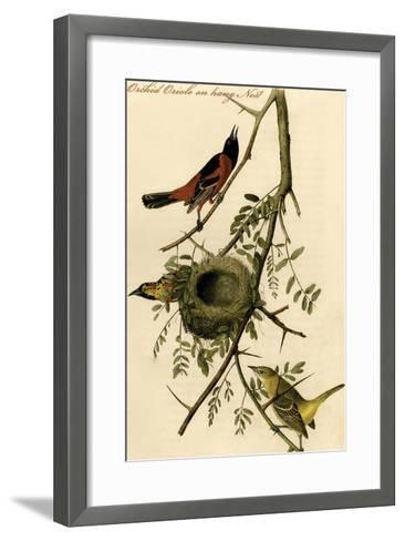 Orchid Oriole on Hang Nest-John James Audubon-Framed Art Print