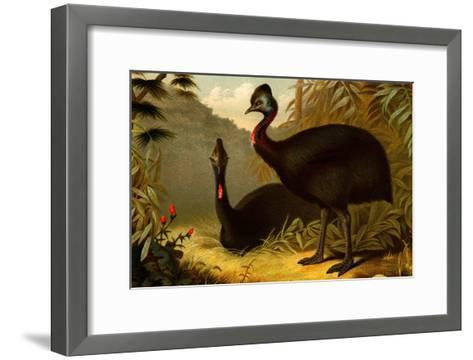 Cassowaries-F^W^ Kuhnert-Framed Art Print