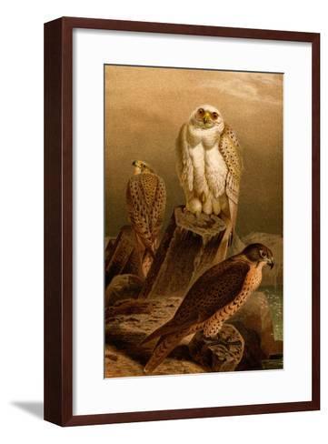 Arctic Falcon-F^W^ Kuhnert-Framed Art Print