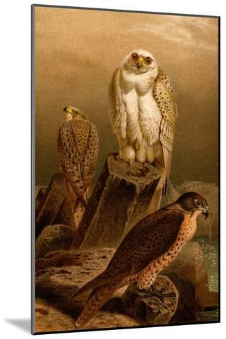 Arctic Falcon-F^W^ Kuhnert-Mounted Art Print