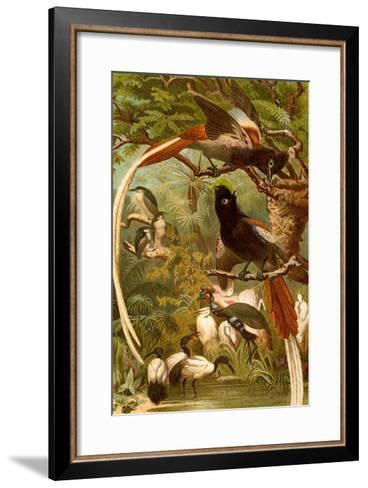 Pygmy Bird of Paradise-F^W^ Kuhnert-Framed Art Print
