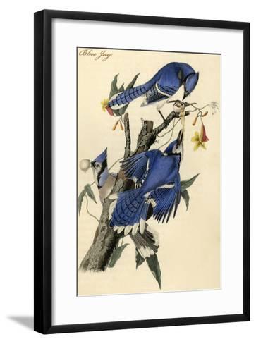 Blue Jay-John James Audubon-Framed Art Print