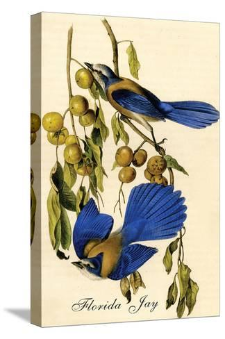 Florida Jay-John James Audubon-Stretched Canvas Print
