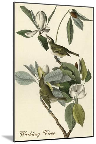 Warbling Vireo-John James Audubon-Mounted Art Print