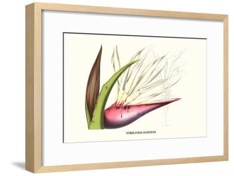Bird of Paradise Flower-Louis Van Houtte-Framed Art Print