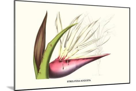 Bird of Paradise Flower-Louis Van Houtte-Mounted Art Print