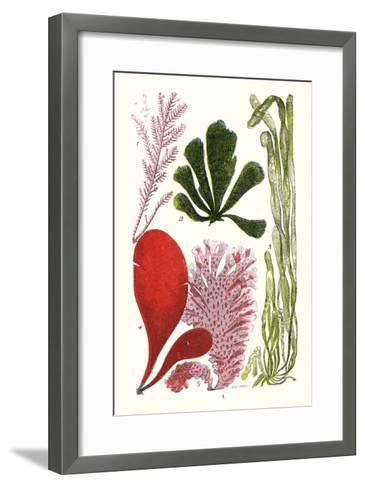 Seaweeds - Common Coralline-James Sowerby-Framed Art Print