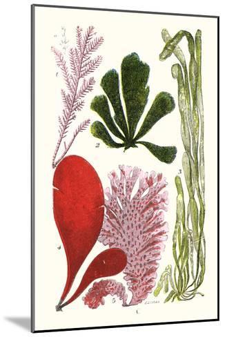 Seaweeds - Common Coralline-James Sowerby-Mounted Art Print