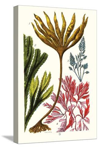 Seaweeds-James Sowerby-Stretched Canvas Print