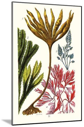 Seaweeds-James Sowerby-Mounted Art Print