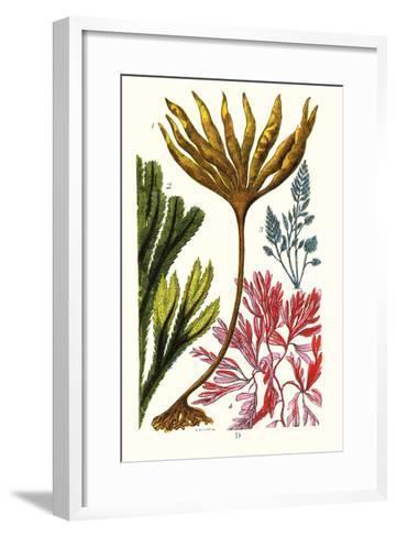 Seaweeds-James Sowerby-Framed Art Print