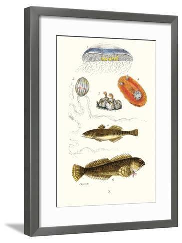 Medusa Jellyfish, Acorn Barnacle, Sea Slug, Spotted Goby-James Sowerby-Framed Art Print