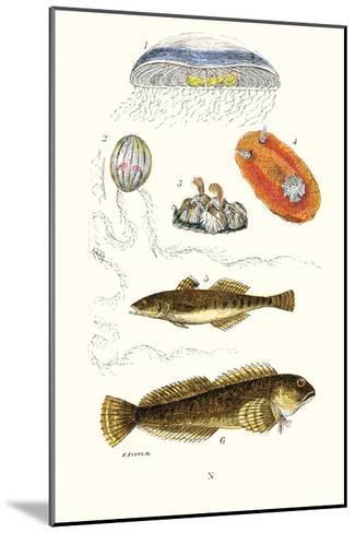 Medusa Jellyfish, Acorn Barnacle, Sea Slug, Spotted Goby-James Sowerby-Mounted Art Print