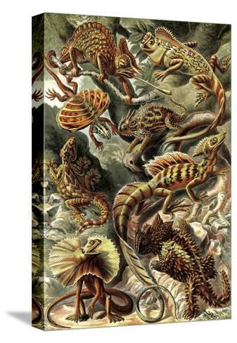 Lizards-Ernst Haeckel-Stretched Canvas Print