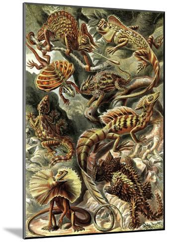 Lizards-Ernst Haeckel-Mounted Art Print