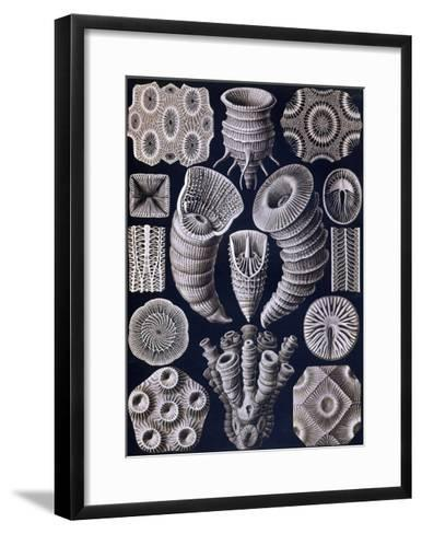 Tetracoralla - Coral-Ernst Haeckel-Framed Art Print