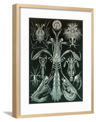 Thoracostraca, Crustaceans,-Ernst Haeckel-Framed Art Print