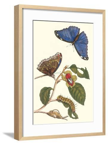 Epiphytic Climbing Plant with a Peleides Blue Morpho Butterfly and a Gulf Fritillary-Maria Sibylla Merian-Framed Art Print