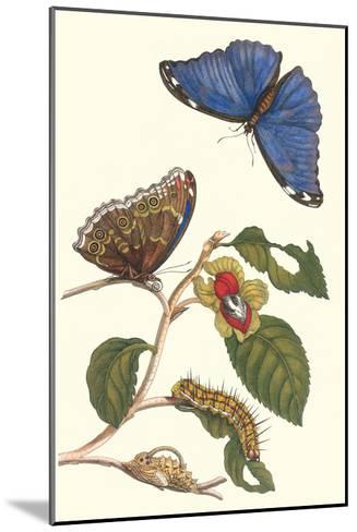 Epiphytic Climbing Plant with a Peleides Blue Morpho Butterfly and a Gulf Fritillary-Maria Sibylla Merian-Mounted Art Print