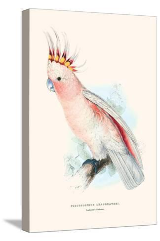 Leadbeater's Cockatoo - Cocatua Leadbeateri-Edward Lear-Stretched Canvas Print