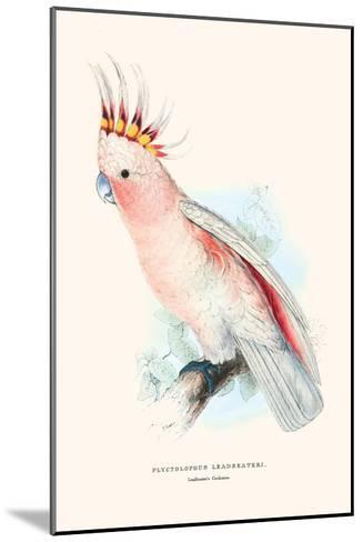 Leadbeater's Cockatoo - Cocatua Leadbeateri-Edward Lear-Mounted Art Print