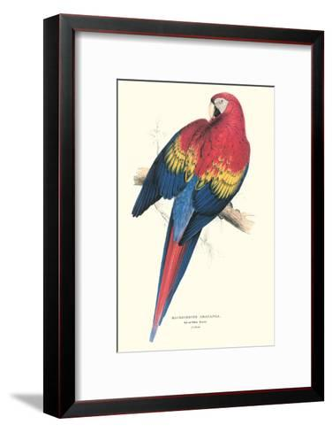 Red and Yellow Macaw - Ara Macao-Edward Lear-Framed Art Print