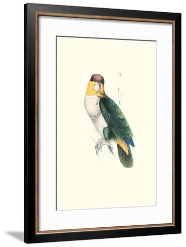 Bay Headed Parrot - Pionites Leucogasper-Edward Lear-Framed Art Print