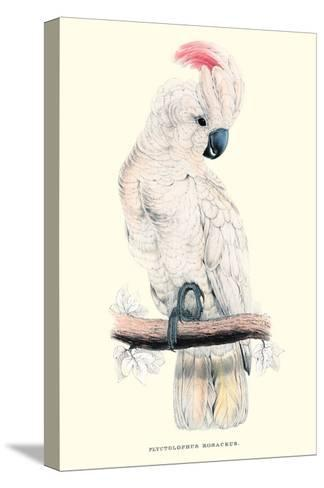 Salmon-Crested Cockatoo - Cacatua Moluccensis-Edward Lear-Stretched Canvas Print