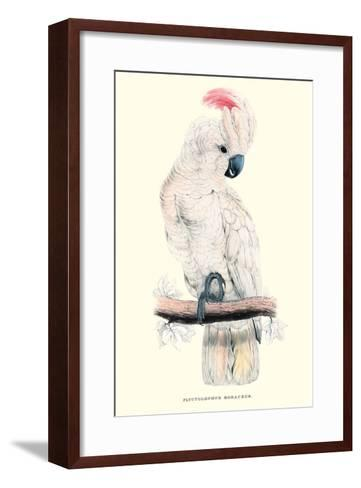 Salmon-Crested Cockatoo - Cacatua Moluccensis-Edward Lear-Framed Art Print
