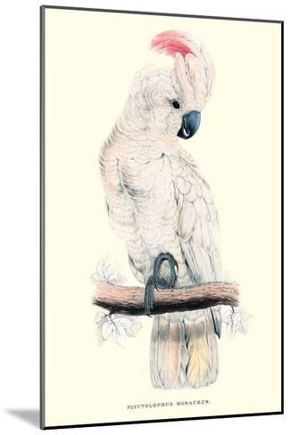 Salmon-Crested Cockatoo - Cacatua Moluccensis-Edward Lear-Mounted Art Print