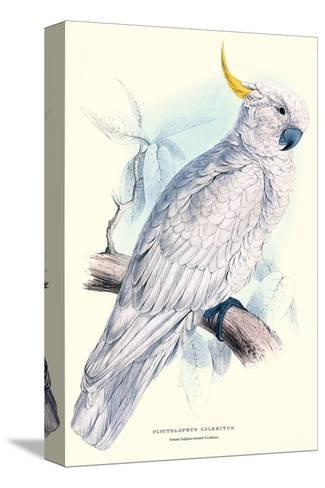 Greater Sulpher-Crested Cuckatoo - Cacatua Galerita-Edward Lear-Stretched Canvas Print