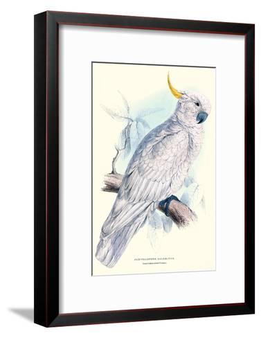 Greater Sulpher-Crested Cuckatoo - Cacatua Galerita-Edward Lear-Framed Art Print
