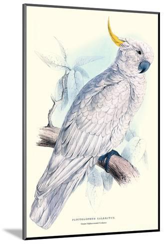 Greater Sulpher-Crested Cuckatoo - Cacatua Galerita-Edward Lear-Mounted Art Print