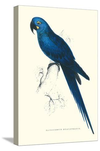 Blue and Yellow Macaw - Ara Ararauna-Edward Lear-Stretched Canvas Print