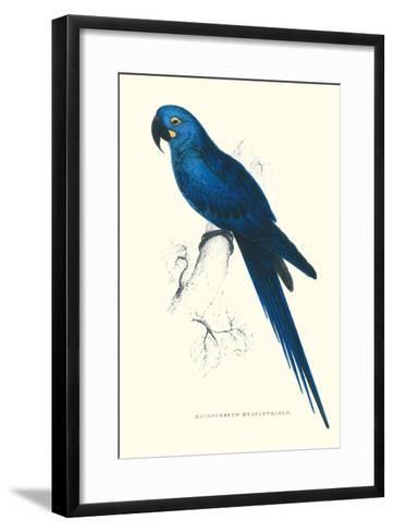 Blue and Yellow Macaw - Ara Ararauna-Edward Lear-Framed Art Print
