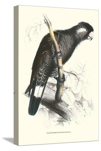 Baudine's Cockatoo - Calyptorhynchus, Funereus Baudini-Edward Lear-Stretched Canvas Print