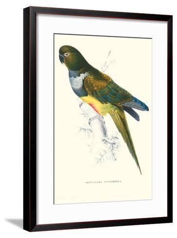 Patagonian Parakeet Macaw - Cyanoliseus Patagonus-Edward Lear-Framed Art Print
