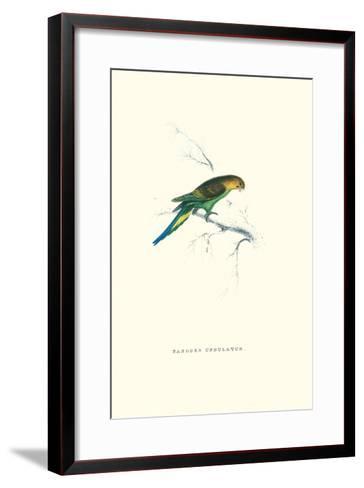 Undulated Parakeet - Nelopsittacus Undulatus-Edward Lear-Framed Art Print
