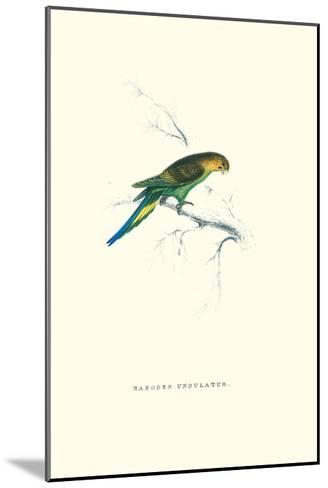 Undulated Parakeet - Nelopsittacus Undulatus-Edward Lear-Mounted Art Print