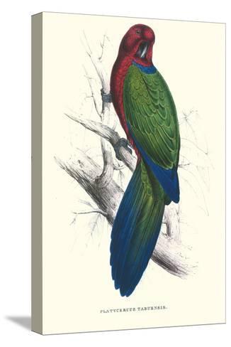 Tabuan Parakeet - Prosapeia Tabuensis-Edward Lear-Stretched Canvas Print