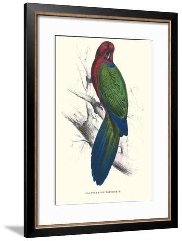 Tabuan Parakeet - Prosapeia Tabuensis-Edward Lear-Framed Art Print