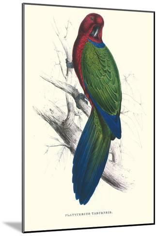 Tabuan Parakeet - Prosapeia Tabuensis-Edward Lear-Mounted Art Print