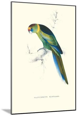 Barnard's Parakeet - Barnardius Zonarius Barnardi-Edward Lear-Mounted Art Print