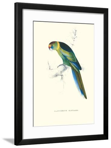 Barnard's Parakeet - Barnardius Zonarius Barnardi-Edward Lear-Framed Art Print