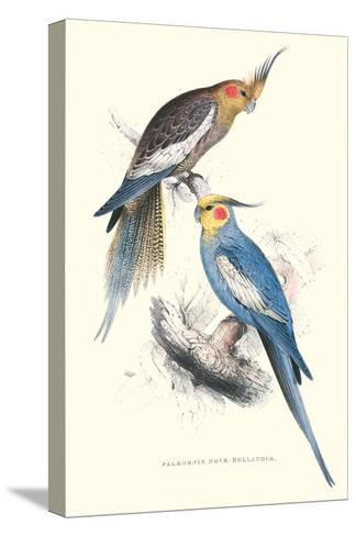 New Holland Parakeets -Nynphicus Hollandicus-Edward Lear-Stretched Canvas Print